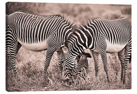 Stampa su tela  Two Zebras Grazing Together - David DuChemin