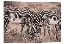 Forex  Two Zebras Grazing Together - David DuChemin