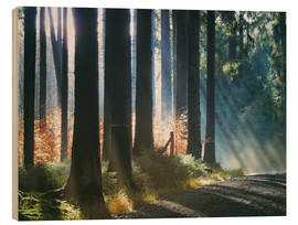 Stampa su legno  Morning Light in the Forrest - Martina Cross