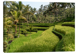 Stampa su tela  Bali rice terrace - Peter Schickert