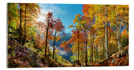 Stampa su vetro acrilico  Mountain forest in autumn - Michael Rucker