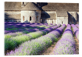 Vetro acrilico  Famous Senanque abbey with its lavender field, Provence, France - Matteo Colombo