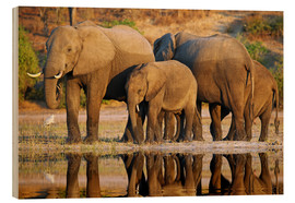 Stampa su legno  Elephants at a river, Africa wildlife - wiw
