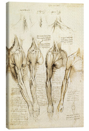 Tela  Muscles of shoulder, arm and neck - Leonardo da Vinci