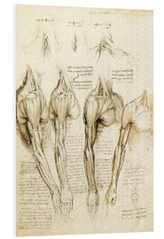 Forex  Muscles of shoulder, arm and neck - Leonardo da Vinci