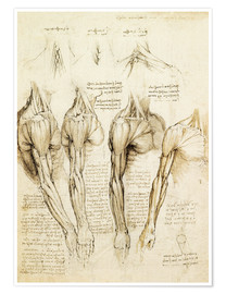Poster Muscles of shoulder, arm and neck