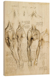 Legno  Muscles of shoulder, arm and neck - Leonardo da Vinci