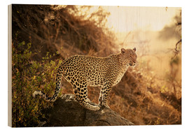 Stampa su legno  female Leopard at sunset - Jürgen Ritterbach