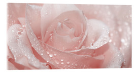 Stampa su vetro acrilico  Rose with drops - Atteloi