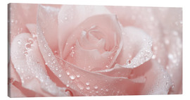 Tela  Rose with drops - Atteloi