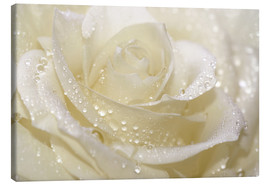 Tela  White rose with drops - Atteloi