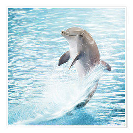 Photoplace Creative - dolphin