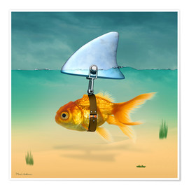Poster  gold fish - Mark Ashkenazi