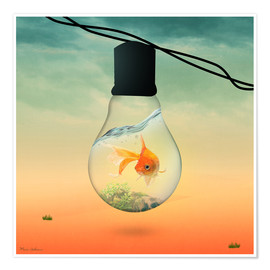 Poster Premium  lights fish B - Mark Ashkenazi