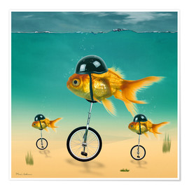 Poster Premium  gold fish - Mark Ashkenazi