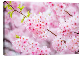 Stampa su tela  Japanese cherry blossom in spring - Jan Christopher Becke