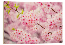 Stampa su legno  Japanese cherry blossom in spring - Jan Christopher Becke