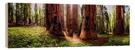 Stampa su legno  Sequoia giant, panoramic - Michael Rucker
