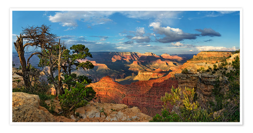 Poster Premium Grand Canyon with knotty pine