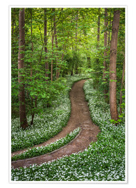 Poster Premium Path through Forest full of Wild Garlic