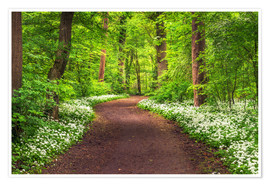 Poster Premium Path through Forest full of Wild Garlic during Spring