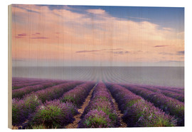 Legno  Landscape: lavender field in summer at sunrise, Provence, France - Matteo Colombo