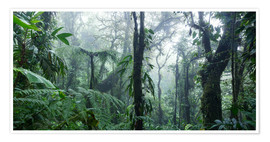 Poster  Misty Rainforest, Costa Rica - Matteo Colombo