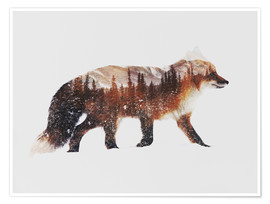 Poster Arctic Red Fox