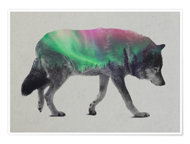Poster  wolf in the aurora borealis - Andreas Lie