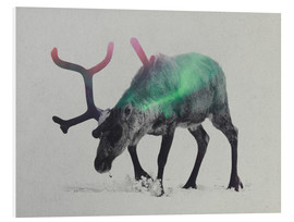 Stampa su PVC  reindeer in the aurora borealis - Andreas Lie
