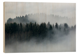 Legno  Fog in the forest - Sebastian Jakob