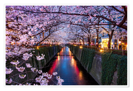 Jan Christopher Becke - Pink cherry blossoms in Tokyo Japan