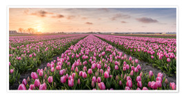 Poster Premium tulips fields holland
