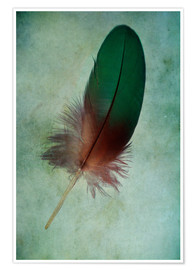 Poster  Green feather - Jaroslaw Blaminsky