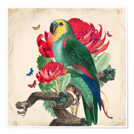 Poster  Oh My Parrot X - Mandy Reinmuth