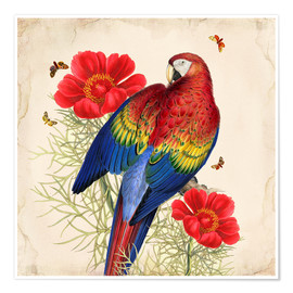 Poster Premium  Oh My Parrot III - Mandy Reinmuth