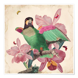 Poster Premium  Oh My Parrot VIII - Mandy Reinmuth