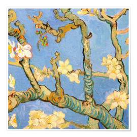 Poster Almond blossom detail