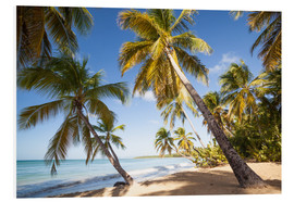 Stampa su PVC  Palm trees and sandy beach in the caribbean, Martinique, France - Matteo Colombo