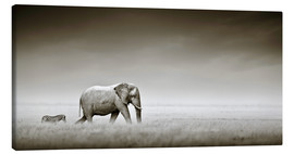 Stampa su tela  Elephant walking past zebra size comparison - Johan Swanepoel