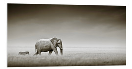 Forex  Elephant walking past zebra size comparison - Johan Swanepoel