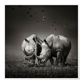 Poster Premium Two Rhinoceros with Birds