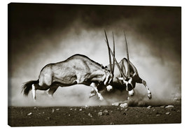 Stampa su tela  Gemsbok antelope fighting in dusty sandy desert - Johan Swanepoel