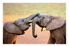 Poster Premium Two elephants interact gently with trunks