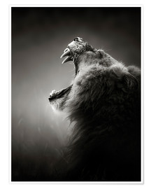 Poster Premium  The reputation of the king - Johan Swanepoel