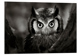 Stampa su schiuma dura  White-faced Owl perched in a tree - Johan Swanepoel
