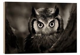 Stampa su legno  White-faced Owl perched in a tree - Johan Swanepoel
