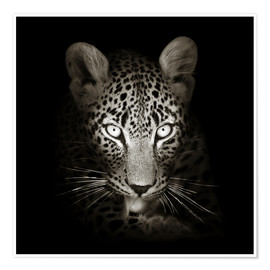 Poster  Leopard portrait licking it's paw - Johan Swanepoel