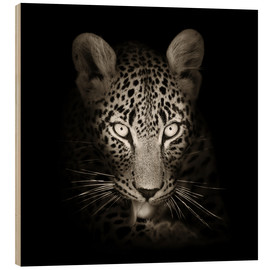 Stampa su legno  Leopard portrait licking it's paw - Johan Swanepoel
