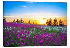 Stampa su tela  Sunrise over a blossoming meadow